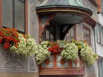 Ампельные цветущие растения для открытых балконов
